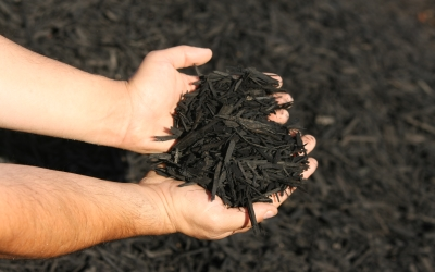 Organic garden mulch dyed black