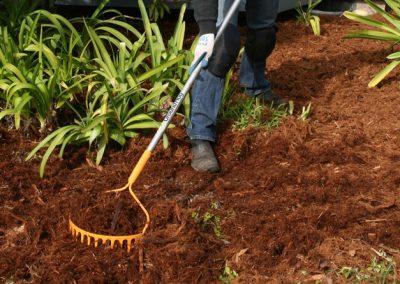 Organic pine garden mulch