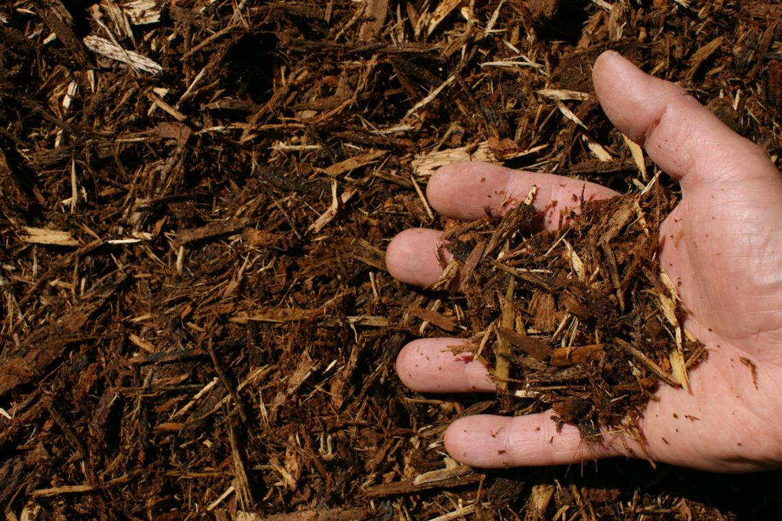 Natural pine organic garden mulch