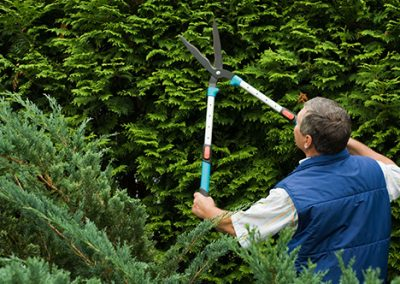 carrollton-hedge-trimming-tools-best-time-to-prune-evergreens