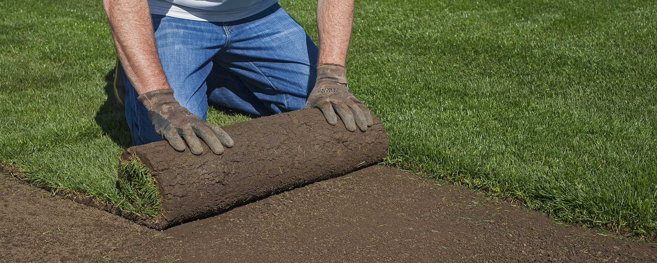 INSTANT LAWN OR TURF
